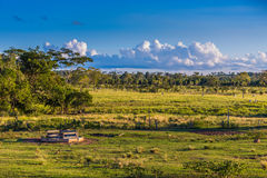 Farm in Pantanal, Brazil, South America Royalty Free Stock Images