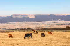 Farm and Pasture in Japan, Winter. Outdoor Stock Photography