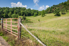 Farm pasture surrounded by trees, grass and wild flowers Stock Photos