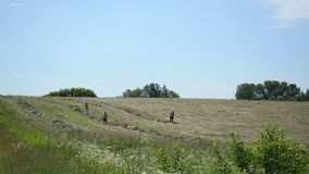 Farm peasant rake hay stock video