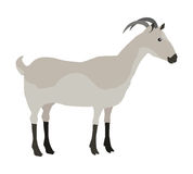 Farm Pet Goat Stock Images