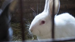 White rabbit in a cage. Side view royalty free stock photos