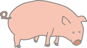 Farm Pig Royalty Free Stock Image