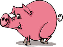 Farm pig cartoon illustration Stock Photography
