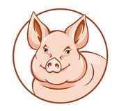 Farm pig Stock Photography