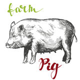 Farm, pig hand drawn vector illustration realistic sketch. Farm, pig hand drawn vector illustration sketch Stock Photo