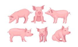Free Farm Pig In Different Poses Vector Set Stock Images - 164526374