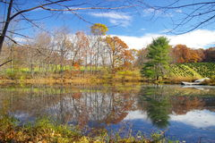 Farm Pond. S can be found throughout Pennsylvania. This one is near a Christmas tree farm royalty free stock photo