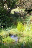 Farm pond Royalty Free Stock Photo