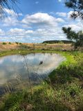Farm Pond. A livestock watering pond in pasture royalty free stock image
