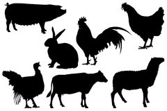 Farm poultry livestock silhouette  set Stock Images