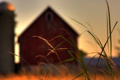 Farm Prairie Grass Royalty Free Stock Photo