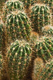 Farm producing a wealth of  cactus species Royalty Free Stock Photo
