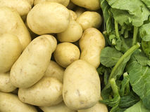 Farm Products VI. White potatoes & greens photographed in a northern Virginia market royalty free stock image