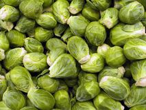 Farm Products VIII. Brussel sprouts photgraphed at a northern Virginia market royalty free stock images