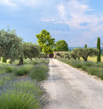 Farm in Provence Royalty Free Stock Photography