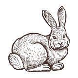 Farm rabbit animal sketch, isolated farm on the white background. Vintage style. Farm rabbit animal sketch, isolated farm on the white background. Vintage style Royalty Free Stock Photos