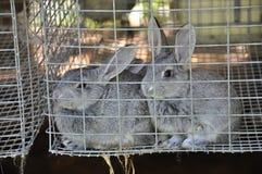 Farm Rabbits Stock Photo