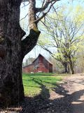 Farm: red barn with spring maples Royalty Free Stock Images