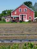 Farm: red barn with seedlings Royalty Free Stock Photos