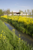 Farm in rice field. Rice fields with a channel with yellow flowers and a farm on the banks Royalty Free Stock Images