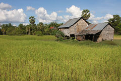 Farm and rice fields in Cambodia Royalty Free Stock Photography
