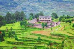 Farm on rice terraced fields in surice, Stock Photo