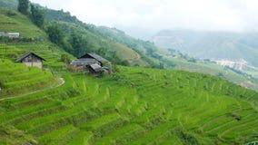 Farm with rice terraces in Sapa Vietnam Stock Image