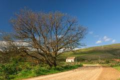 Farm road Royalty Free Stock Photography