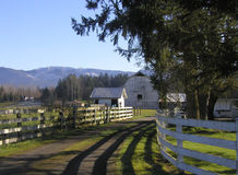Farm Road. A charming little lane, flanked by white fences, leading up to the main house and outlying buildings of a farm. Located in Black Diamond, Washington Royalty Free Stock Photography