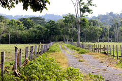 Farm Road. A road lined with fences heads into the jungle Stock Photos