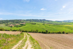 Farm road in Tuscan landscape Stock Photo