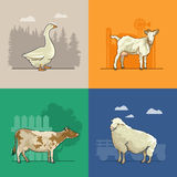 Farm rural landscape with goat, sheep, cow and goose. Agriculture vector illustration. Colorful countryside. Poster with retro village. Think green. Linean Stock Photography