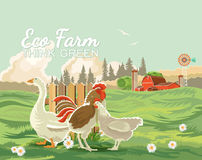 Farm rural landscape with hen and cock. Agriculture vector illustration. Colorful countryside. Poster with vintage farm. Farm rural landscape with hen, cock and Stock Photos