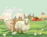 Farm rural landscape with sheeps. Agriculture vector illustration. Colorful countryside. Poster with vintage farm. Farm rural landscape with white sheeps Royalty Free Stock Photography