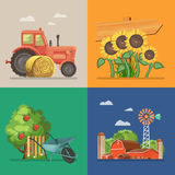 Farm rural landscape with tractor, sunflowers, farm and apple tree. Line. Agriculture vector illustration. Colorful countryside. Stock Photos