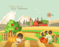 Farm rural landscape with vegetables. Agriculture vector illustration. Colorful countryside. Poster with retro village and farm Royalty Free Stock Image