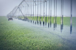 Farm's crop being watered by sprinkler irrigation system Stock Image