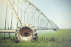 Farm's crop being watered by sprinkler irrigation system Stock Photo