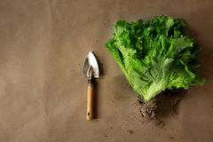 Farm salad with roots stock photos