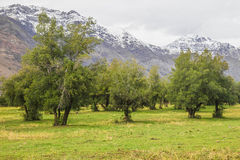 Farm in San Alfonso valley, Chile Royalty Free Stock Images