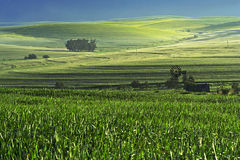 Farm scene. A farm scene full of colour in the western cape south africa Stock Photography
