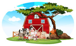 Farm scene with animals Royalty Free Stock Images