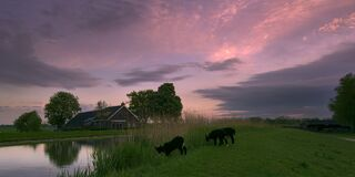 Farm Scene At Dawn Stock Photo