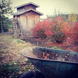 Farm Scene. Blue wheelbarrow in front of Autumn blueberry bushes and rustic chicken coop Royalty Free Stock Photos