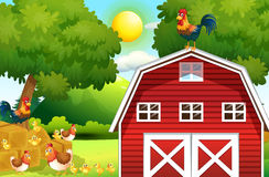 Farm scene with chickens on the barn Stock Image