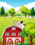 Farm scene with cows and barn Stock Image