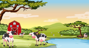 Farm scene with cows Royalty Free Stock Photo
