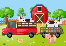 Farm scene with cows on the truck Stock Photography