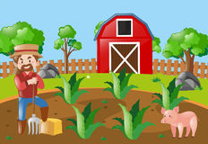 Farm scene with farmer and pig Stock Images